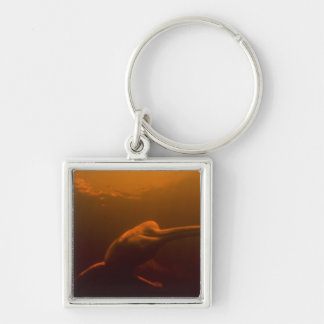 Amazon River Dolphin (Inia geoffrensis) or Boto, Keychain