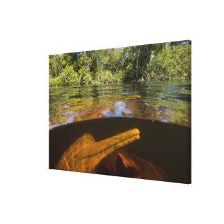 Amazon River Dolphins (Inia geoffrensis) Ariau Canvas Print