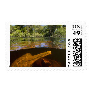 Amazon River Dolphins (Inia geoffrensis) Ariau Postage Stamp