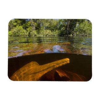 Amazon River Dolphins (Inia geoffrensis) Ariau Rectangular Photo Magnet