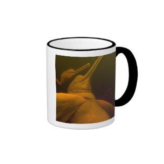 Amazon River Dolphins or Botos (Inia 2 Mugs