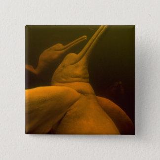 Amazon River Dolphins or Botos (Inia 2 Pinback Button
