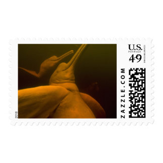 Amazon River Dolphins or Botos Inia 2 Postage Stamps