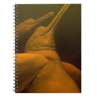 Amazon River Dolphins or Botos (Inia 2 Spiral Notebook