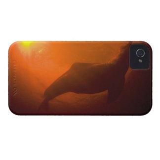 Amazon River Dolphins or Botos (Inia iPhone 4 Case