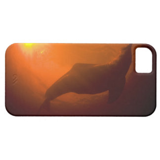 Amazon River Dolphins or Botos (Inia iPhone SE/5/5s Case