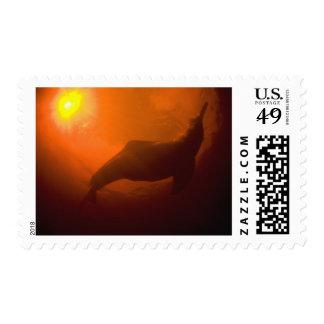 Amazon River Dolphins or Botos Inia Postage Stamp