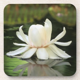 Amazon Water Lily (Victoria Amazonica) Flower Drink Coaster