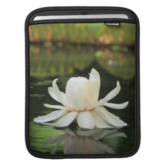 Amazon Water Lily (Victoria Amazonica) Flower iPad Sleeve