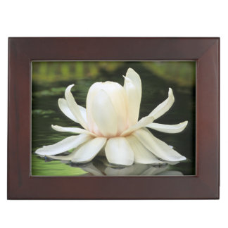 Amazon Water Lily (Victoria Amazonica) Flower Memory Box