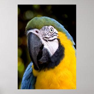 Amazonian Parrot Portrait Poster