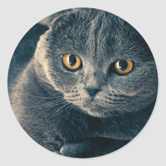 Amber Eyes Cat Stickers