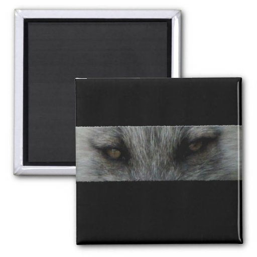 Amber Fox Eyes 2 Inch Square Magnet