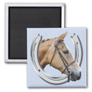 Amber horse magnet