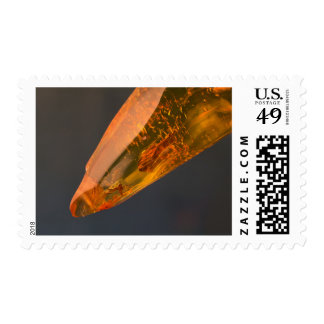 Amber inclusion | postage