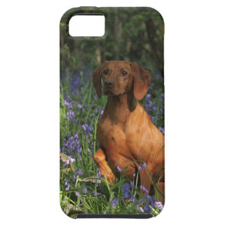 Amber iPhone SE/5/5s Case