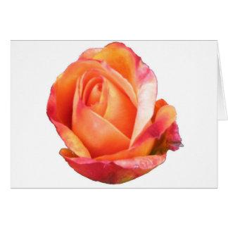Amber Sunblaze Miniature Rose Card