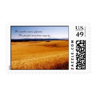 Amber waves postage stamp