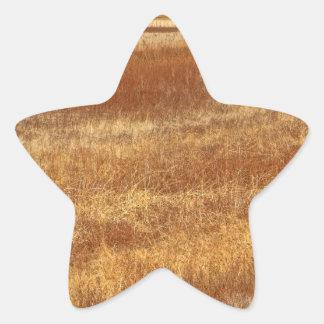 Amber Waves Star Sticker