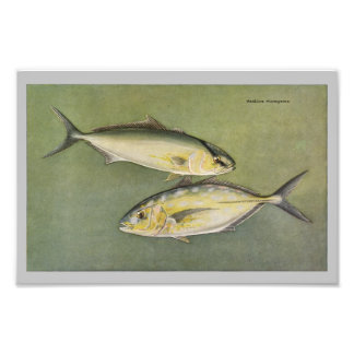 Amber & Yellow Jack Vintage Fish Print Photo Print