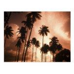 Ambergris Caye, Belice, America Central. 2 Tarjeta Postal