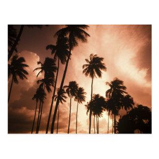 Ambergris Caye, Belize, Central America. 2 Postcard