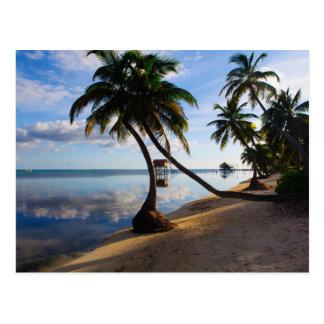 Ambergris Caye Belize Postcard