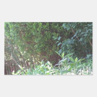 Ambiente salvaje de los regalos NVN672 del jardín