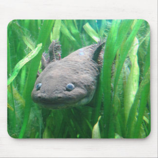 Ambystoma andersoni mouse pad