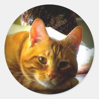 Ame este gato en descanso dulce etiqueta redonda