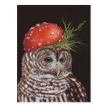 amelie la postal del búho barrado