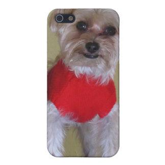 """Ámeme"" - perro lindo en suéter iPhone 5 Protectores"