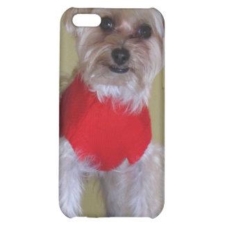 """Ámeme"" - perro lindo en suéter"
