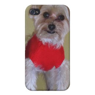 """""""Ámeme"""" - perro lindo en suéter iPhone 4 Cobertura"""