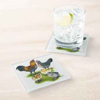 Ameraucana Chicken Family Glass Coaster