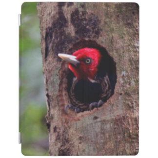 America Central, Costa Rica, Manuel Antonio Cover De iPad