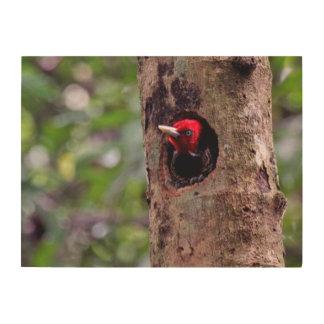America Central, Costa Rica, Manuel Antonio Cuadro De Madera