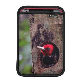 America Central, Costa Rica, Manuel Antonio Fundas iPad Mini