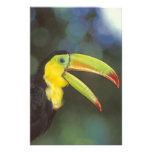 America Central, Costa Rica. Quilla-cargado en cue Impresión Fotográfica