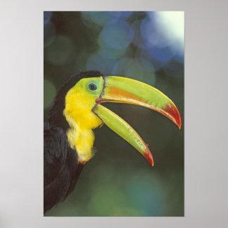 America Central, Costa Rica. Quilla-cargado en cue Póster