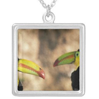 America Central, Honduras. Toucan Quilla-cargado Collar Plateado