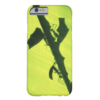 AMERICA CENTRAL, Panamá, Borro Colorado Funda Barely There iPhone 6