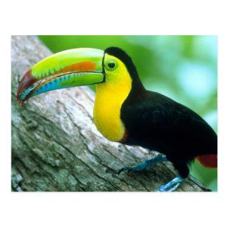AMERICA CENTRAL Panamá isla 2 de Borro Colorado Postales