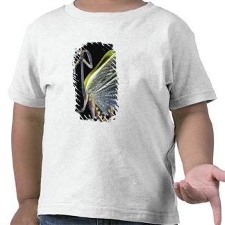 America Central, Panamá, isla de Barro Colorado. 3 Camiseta