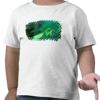 America Central, Panamá, isla de Barro Colorado Camiseta