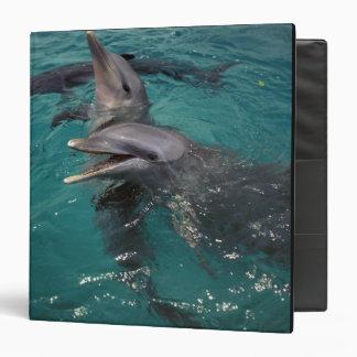 "America Central, Panamá. La botella sospechó delfí Carpeta 1 1/2"""
