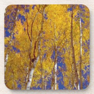 America Fall Season Photography of Trees Beverage Coaster