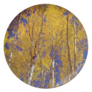 America Fall Season Photography of Trees Melamine Plate