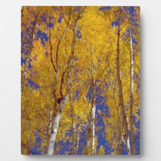 America Fall Season Photography of Trees Plaque