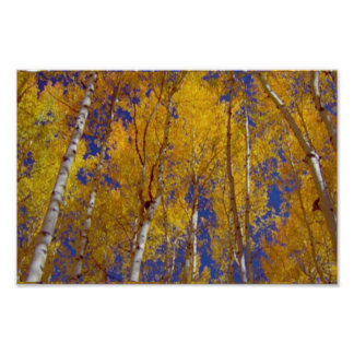 America Tree Line Olympic National Park fall color Poster